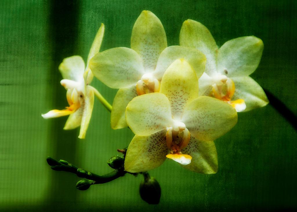 Birthday flowers by Nikonoclaste