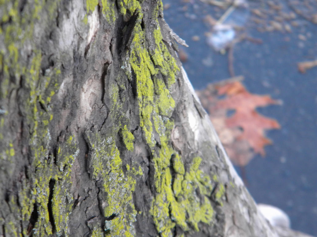 moss on bark by heartbrokensamurai