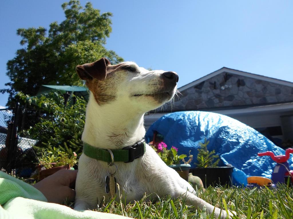 summer dog by heartbrokensamurai