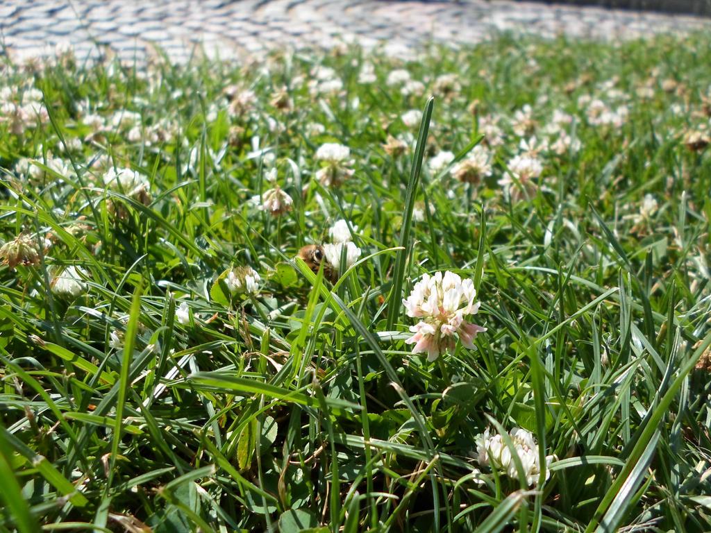 grassy bee by heartbrokensamurai