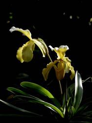 flower #33 by dev-moon