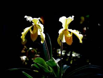 flower #32 [Yellow Fairy] by dev-moon