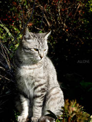 Cat #6 by dev-moon