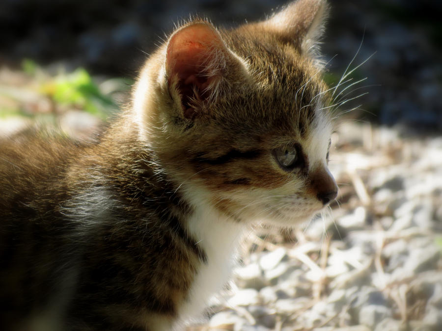 Cat #10