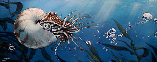 Nautilus by S-Hirsack