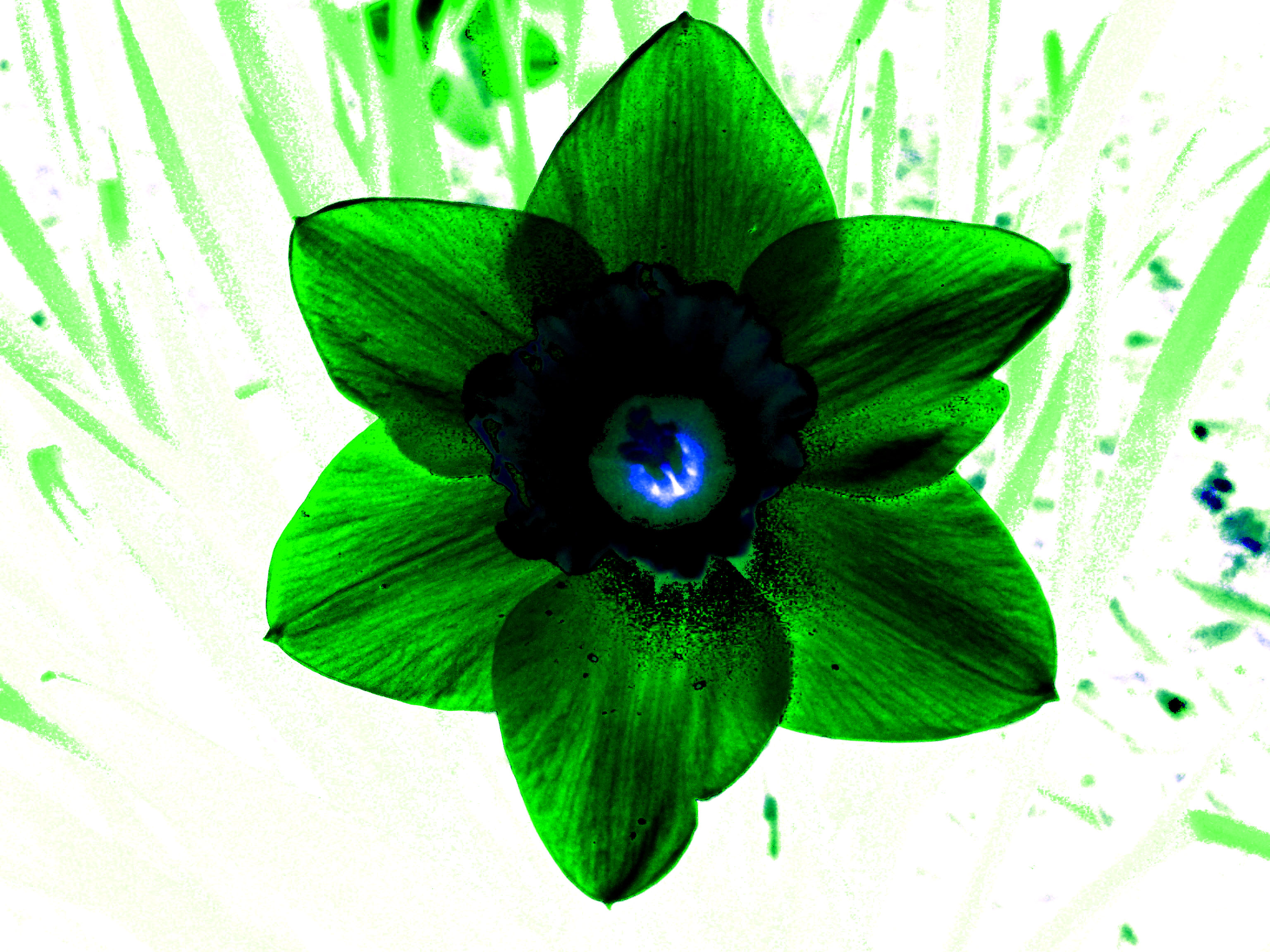 Green Flower by singabettersong on DeviantArt