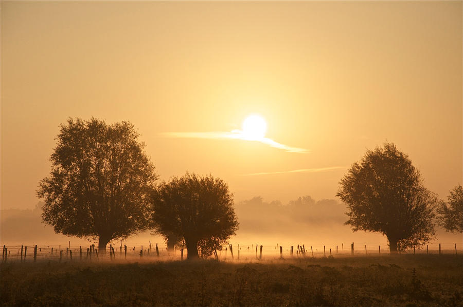 morningSun by BartDeburgh