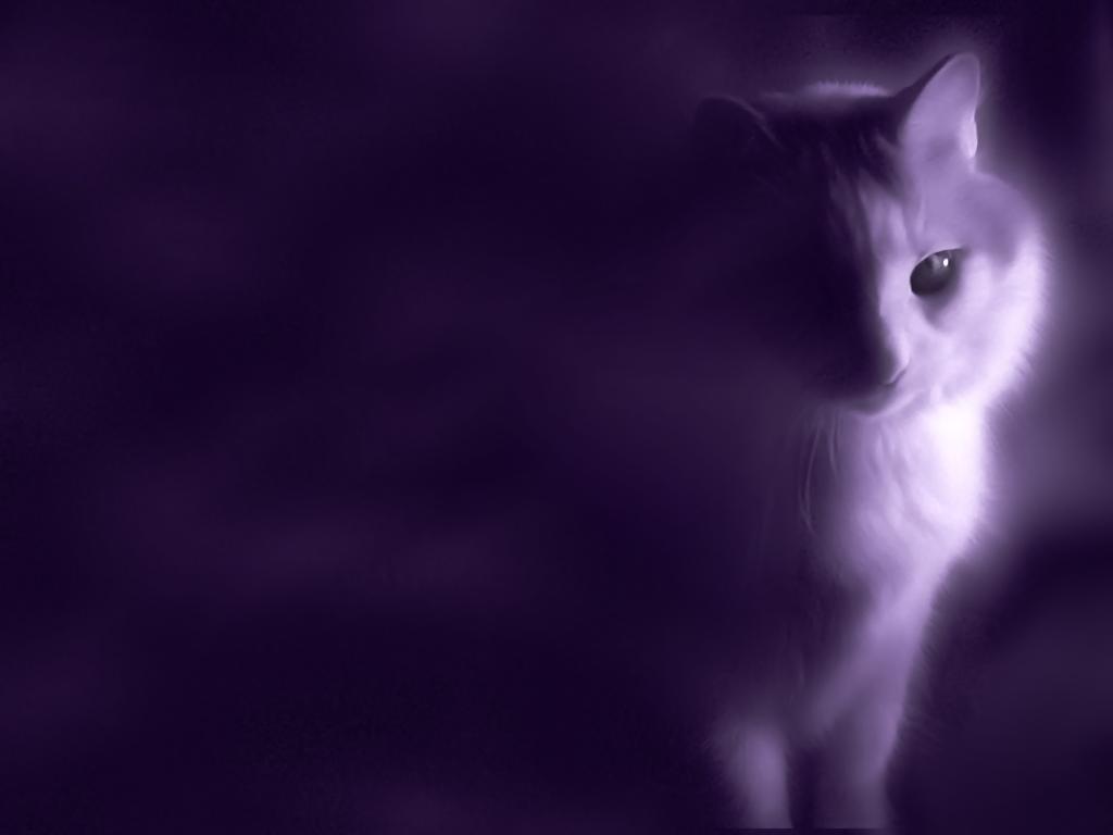 Most Inspiring Wallpaper Cat Mystical - mystical_cat_wallpaper_by_c_n_dwallpapers  Gallery_41416 .png