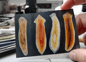 ACEO for kailavmp - planarians