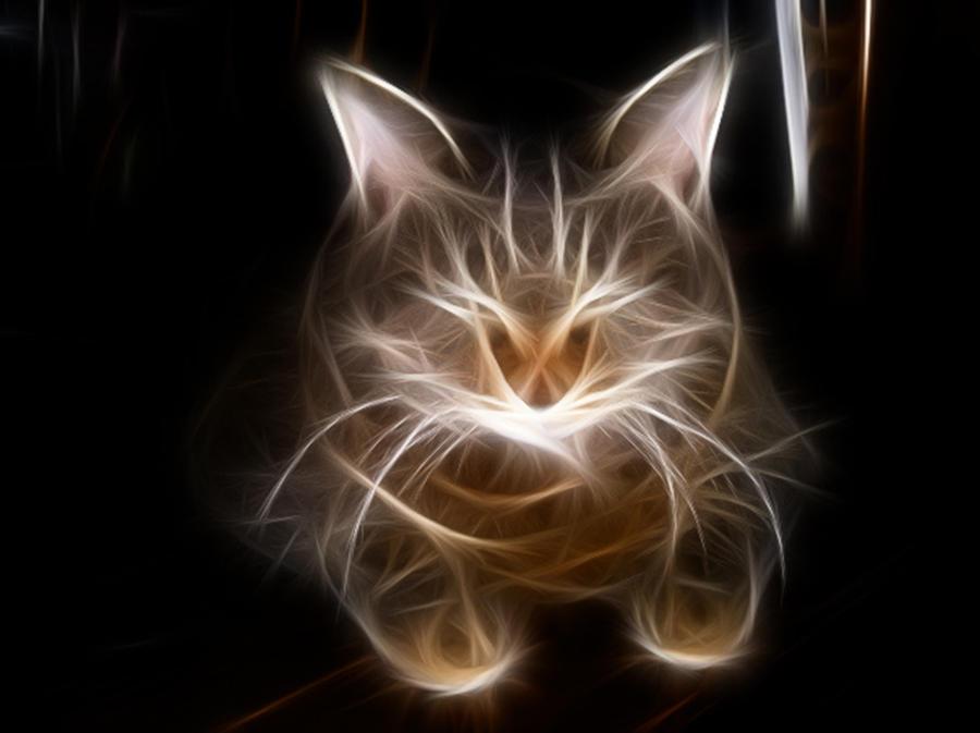 puss by anshu-anshul