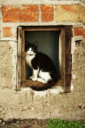 cat by redreddaisy
