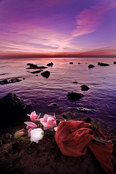 the rose for lovely sunrise.. by Photographertech