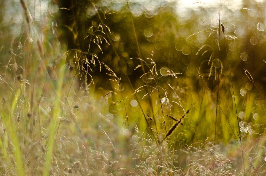 September breath by LuPri