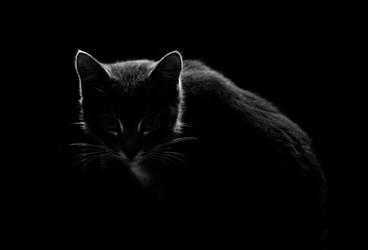 A cat's soul by LuPri