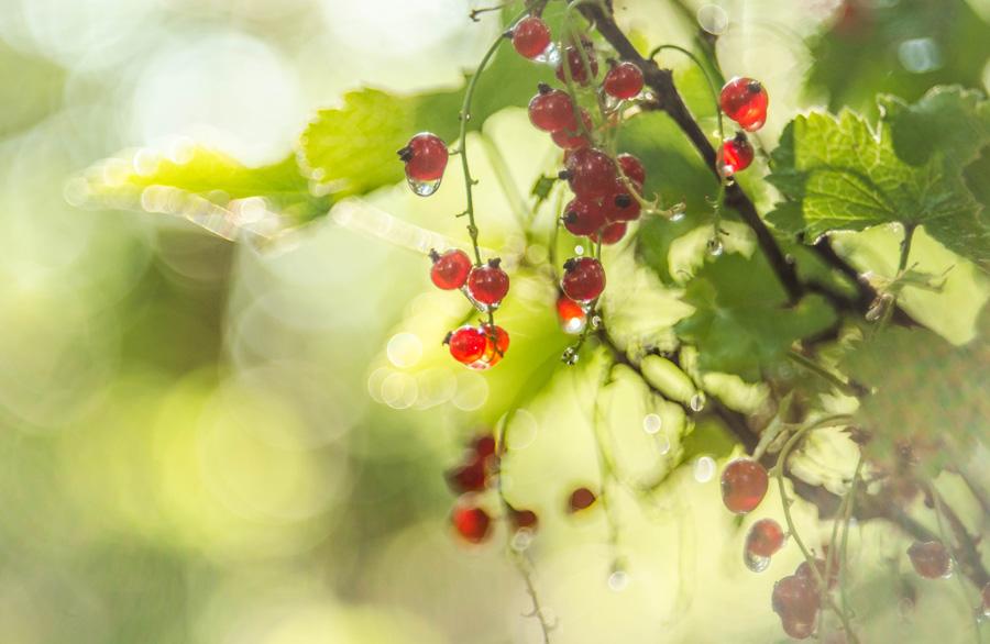 red in the light by LuPri