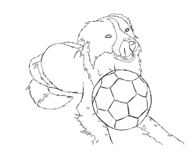 rough collie coloring pages - photo#30