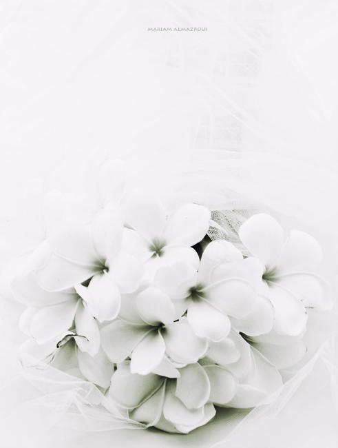 white promise by vi-ol-et