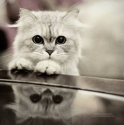 Am I cute? by vi-ol-et