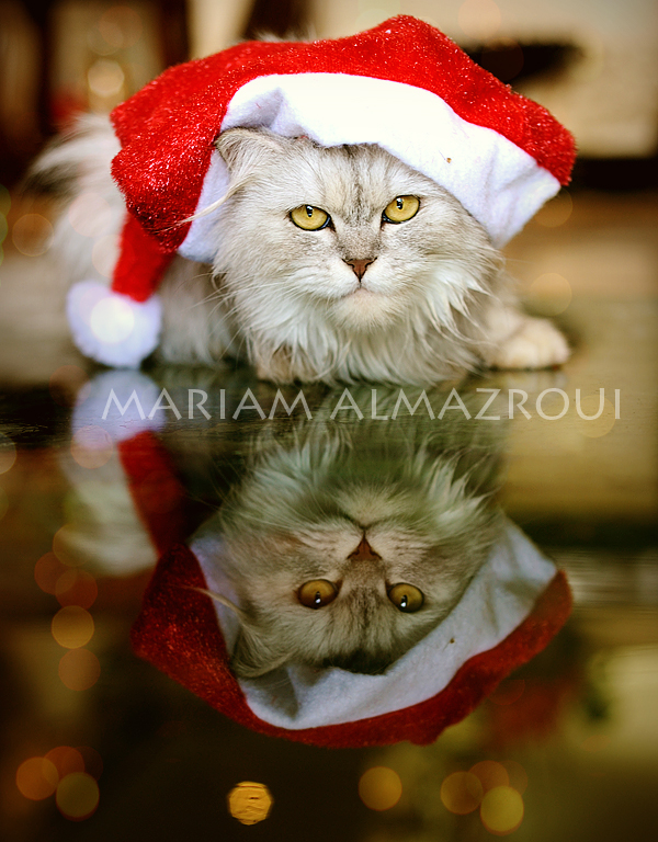 Merry Christmas by vi-ol-et