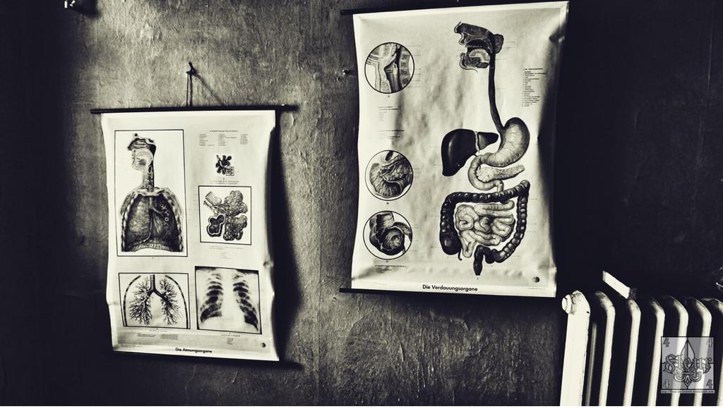 Anatomie by fleur-de-Lis4444