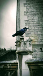 Raven of the Tower