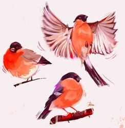 Bullfinches Sketch