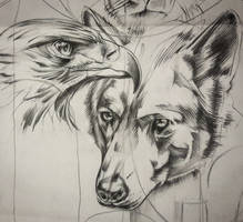 Eagle and wolf sketch for tattoo