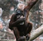 the monkey by orggenetixphotograph
