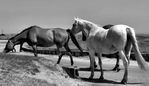 Horses by the Beach by Cazamelia
