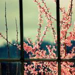 Caged Beauty by Shiin15