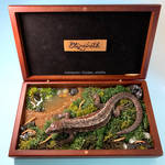 Elizabeth - the viviparous common lizard