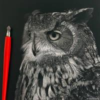 Eurasian eagle owl scratchboard by DPaZZa