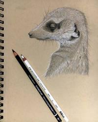 Meerkat sketch by DPaZZa