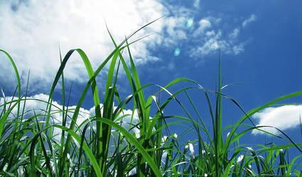 View through the grass