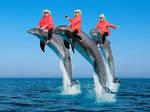 paula deen riding dolphins