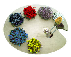 Flower Pallet by creationbooth