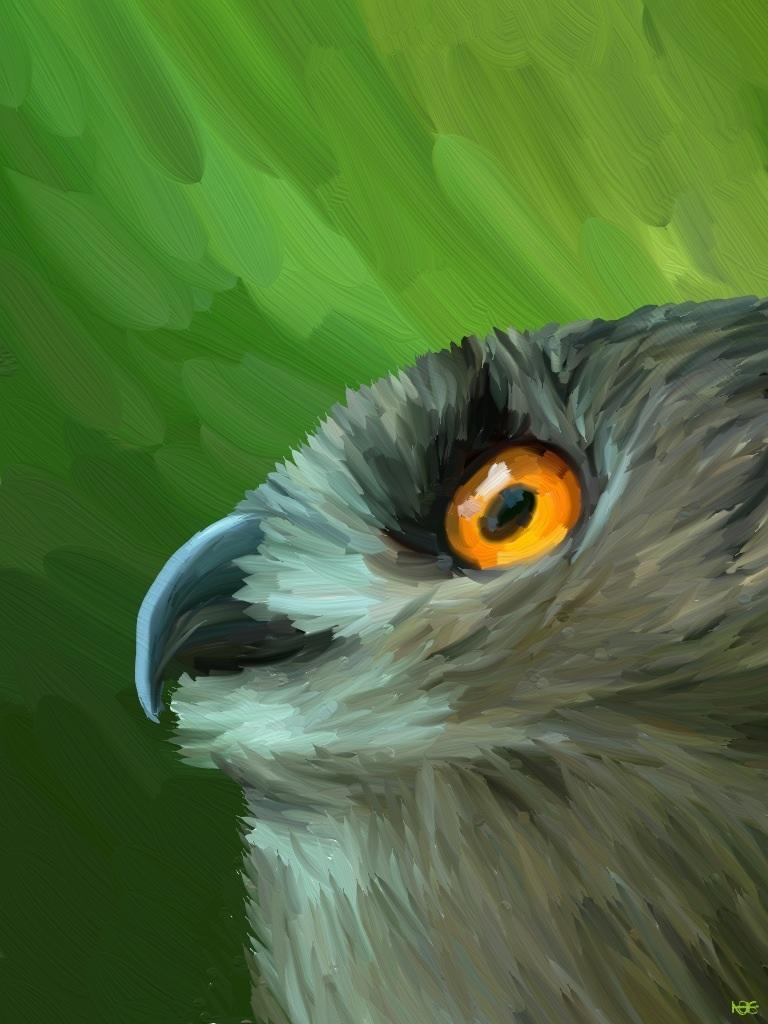 Owl by Tulynae