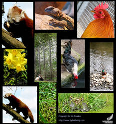 Nature Photography Compilation