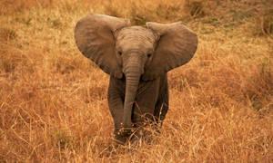Dumbo by nushhhhhh