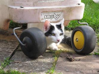Cat drivers by SiennaSkye
