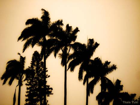 Parque Lage Palms