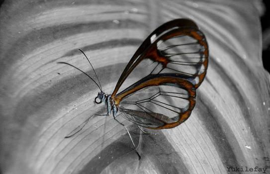 Beautiful and ephemeral