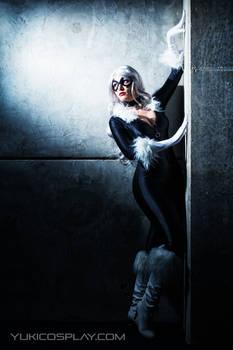 Spotlight - Black Cat Cosplay