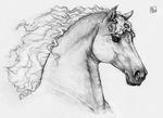 Horse in pencils
