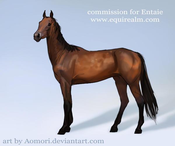 Commission sketch - Akhal Teke by Aomori
