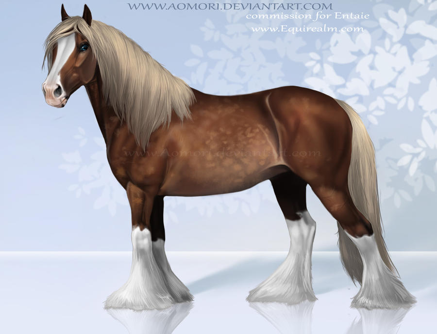 how to draw a gypsy vanner horse