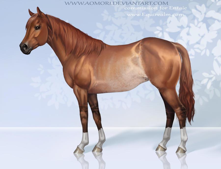 Quarter horse by Aomori