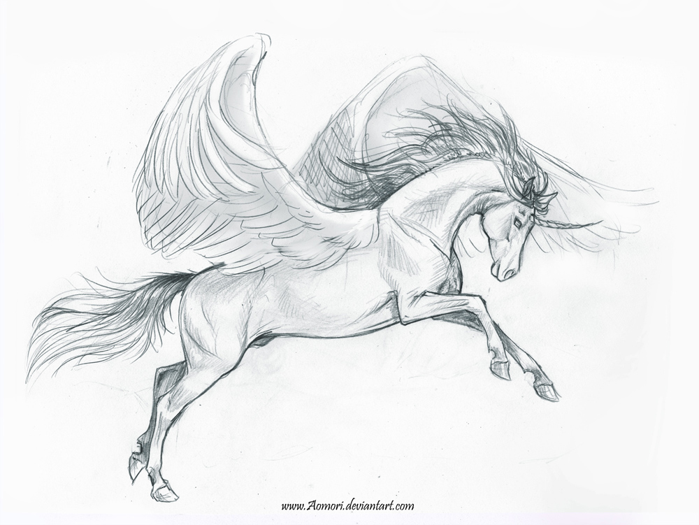 B Calm Of A Pegasus Sketch of...
