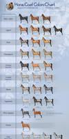 Horse coat colors chart
