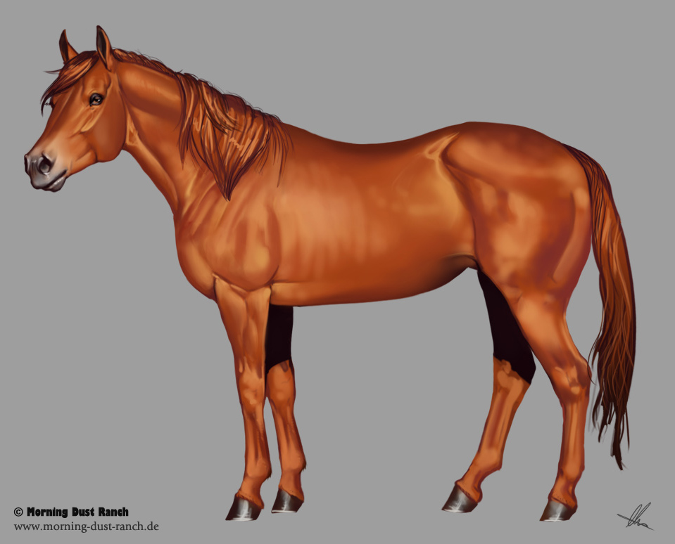 Quarter Horse Drawing ...